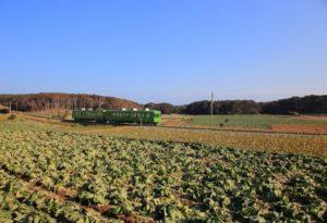 調子電鉄 笠上黒生駅周辺のキャベツ畑の中を走る